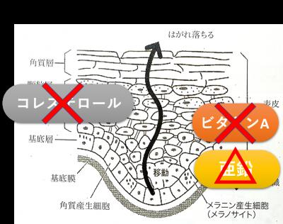 甲状腺機能低下症9