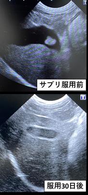 犬・胆泥・角膜潰瘍3
