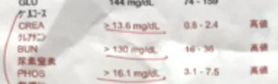 猫の腎不全と再生医療・栄養療法・補完代替医療2
