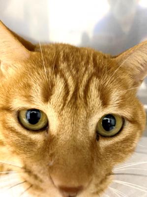 猫の腎不全と再生医療・栄養療法・補完代替医療7