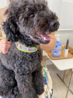 犬の炎症性腸疾患-栄養療法8